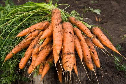 ©Depositphotos/serpla - Как сохранить морковь на зиму?