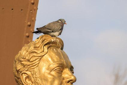©Depositphotos/Vladimir - Примета: Птица накакала на голову